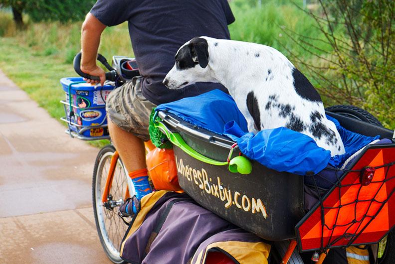 Hundetransport auf dem Gepäckträger