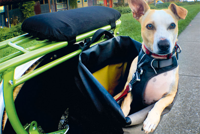 Yuba Lastenrad für Hunde